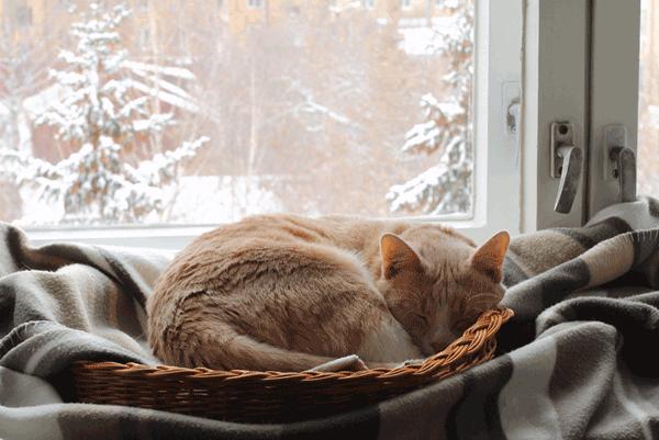 cute brown cat sleeping in basket