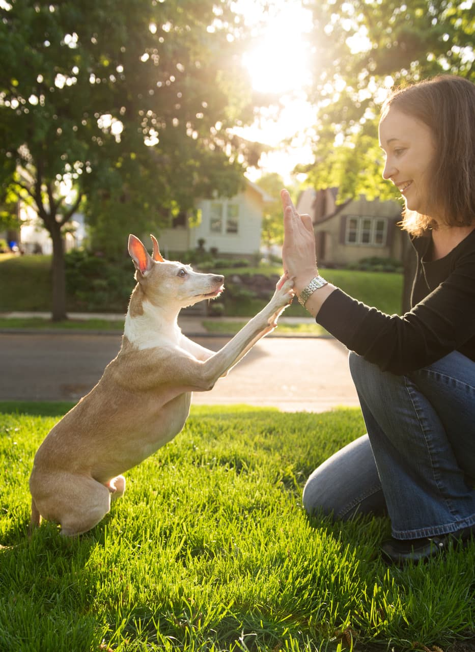 dog giving high five with female